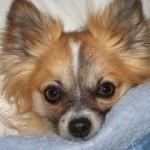 Profile picture of bonnie
