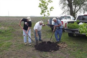 Planting trees at the Chester Royal Grange Hall